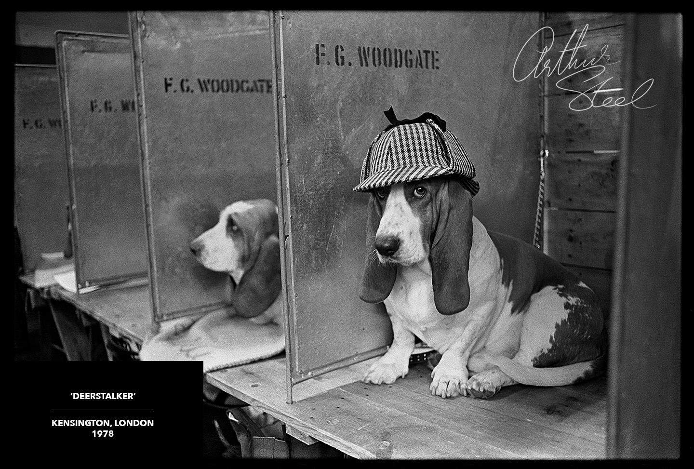rare photograph of a bassett hound wearing a deerstalker hat
