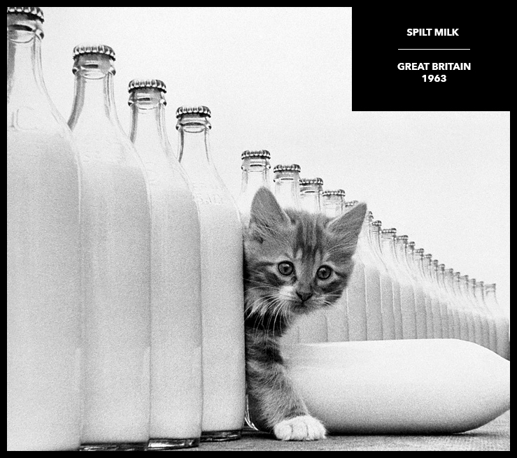 rare black and white photograph cat split milk print